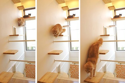 maison chat - cat house